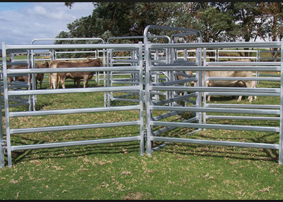 China 1.8mHx2.1mL 6 Rails Heavy Duty Cattle Corral Panels Fence Water / Dust Proof supplier