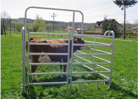 China Light Weight Cattle Corral Panels Animal Fence Panels Round / Square / Oval Tube Type supplier