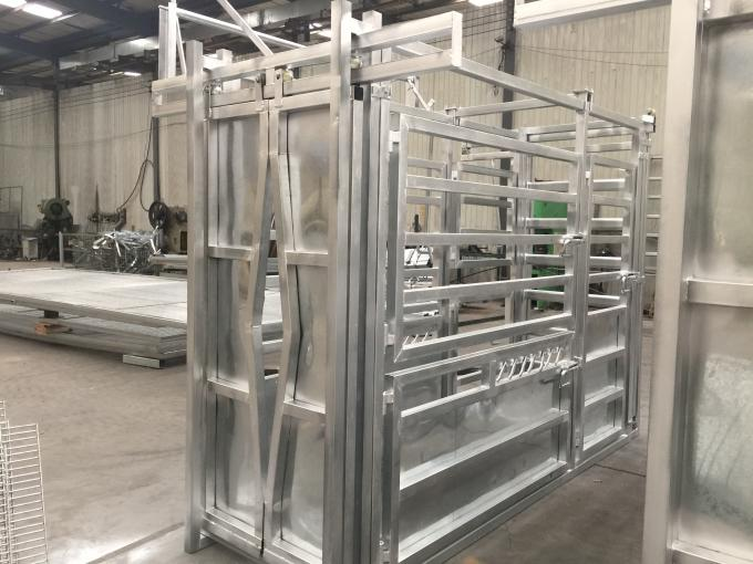 Professional Hot DIP Galvanized Cattle Crush with Weighing Scale
